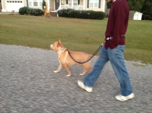 Princess walking on her hands-free dog leash!